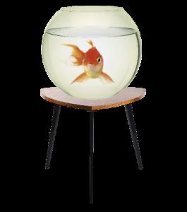 Goldfisch01-1